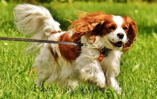 Top 10 Dog Walking Benefits