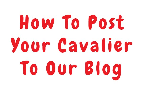 How To Post To Our Blog